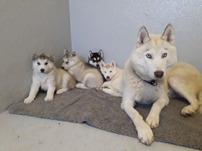 askja with the newest members of our dog family