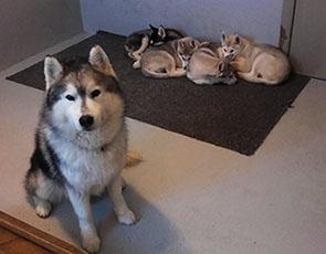 puppy_sitting-crop-u223114